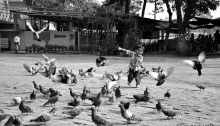 Playing With Pigeons