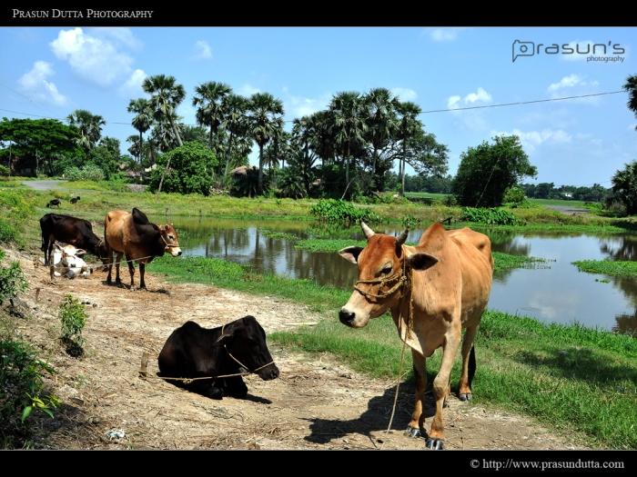 Rural Bengal