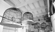 Roy Bari Birdcages