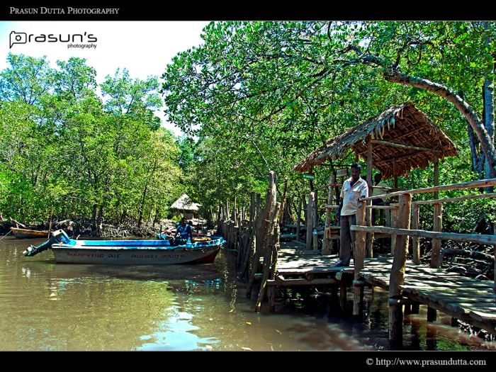 Jungle Jetty